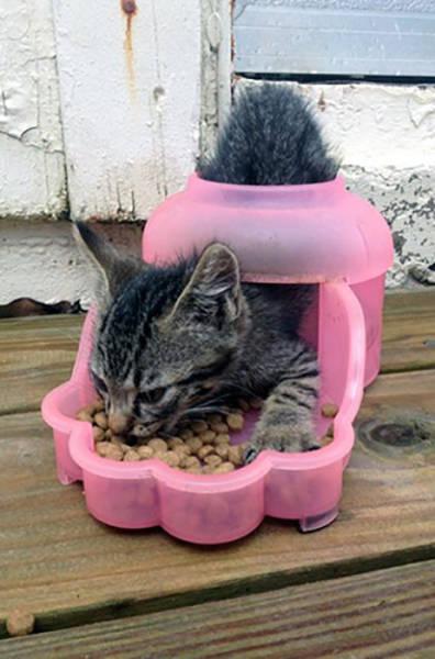 Cats Do the Weirdest Things