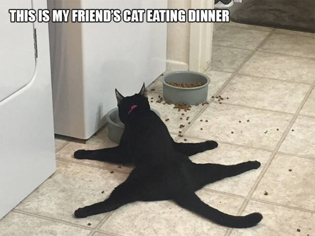 Cats Do the Weirdest Things