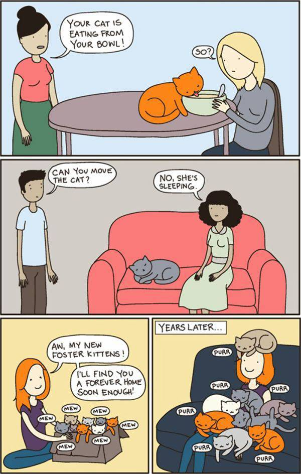 Amusing Illustrations That Cat Owners Will Definitely Agree with