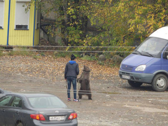 Pets Are a Little Bit Different in Russia