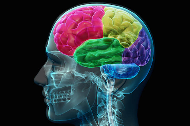 Intriguing Facts about How the Human Brain Really Works