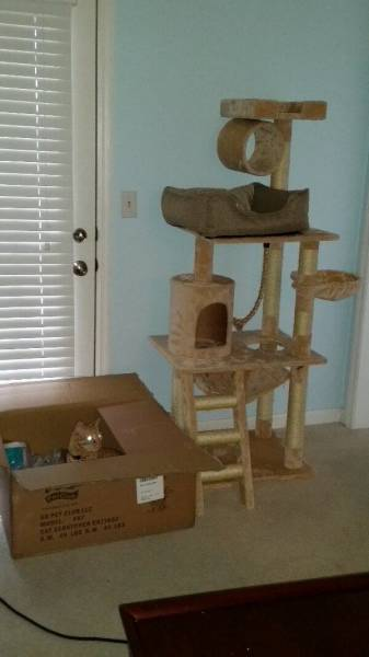 If You Own a Cat Then These Things Will Be Part of Your Daily Life