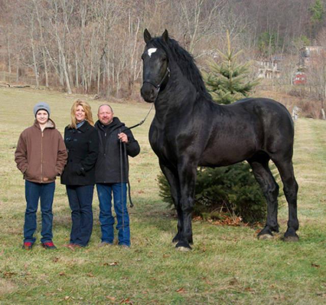 A Few Incredible Giants of the Animal Kingdom