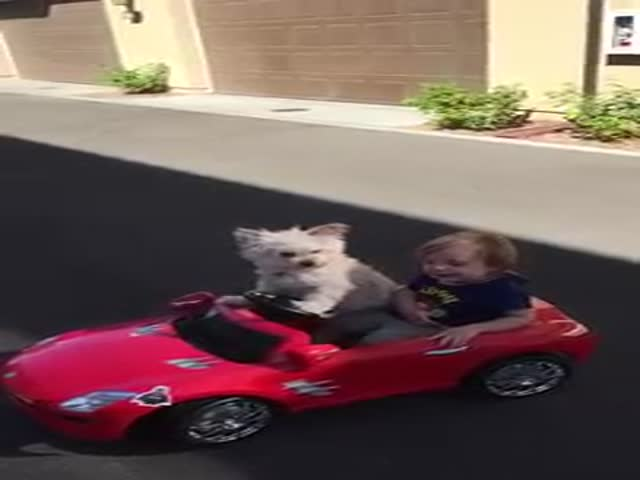 Cute Toddler Hitches a Lift with His Furry Friend Daisy
