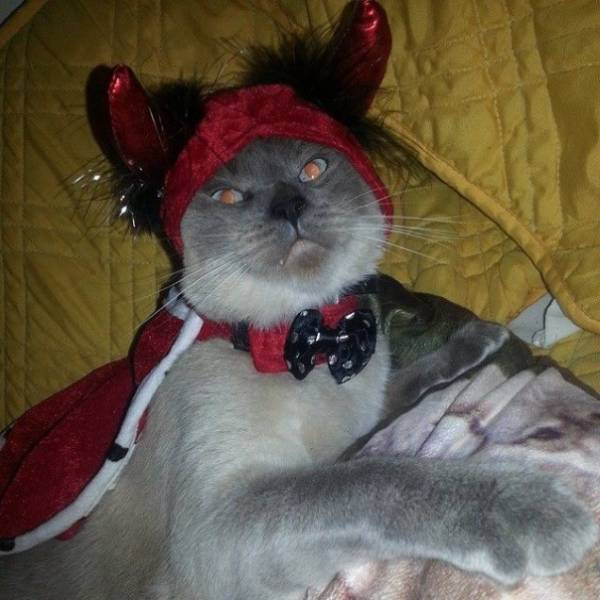 Car 2021: Cats That Are Scarily Evil Looking (18 Pics)