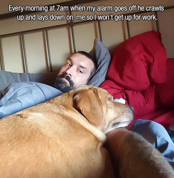 Dogs Make the Best Human Companions