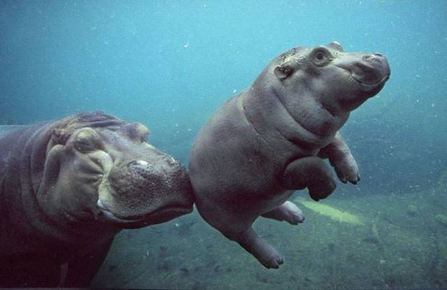 Prepare for a Cuteness Overload When You See These Adorable Baby Animals