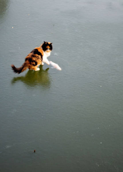 Cat Takes a Big Dive off a Pier in Search of Food and Is Confused by What He Finds