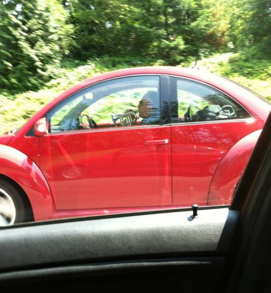 Odd Sights You Normally Wouldn't Expect to See While Driving