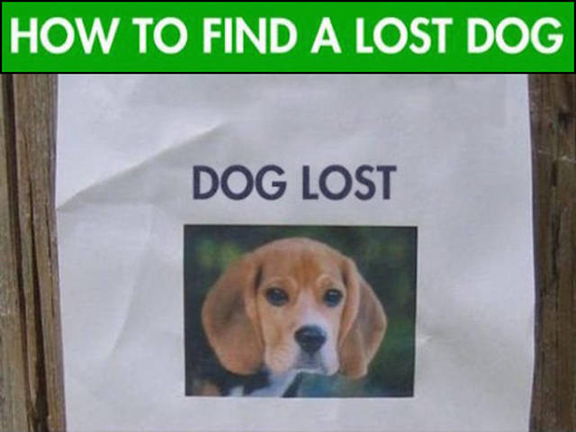 Useful Tricks to Help You Find Your Lost Dog