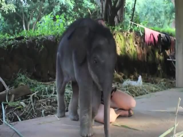 This Baby Elephant Wants to Cuddle and She Is Not Taking No for an Answer