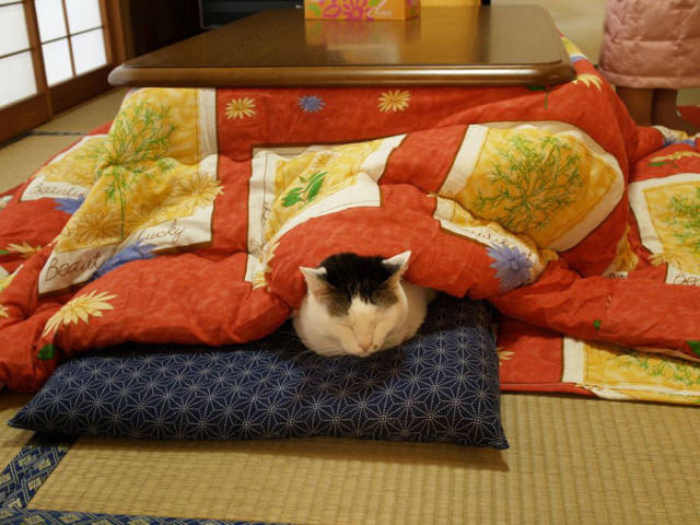 With Japanese Invention You Will Never Want to Get out of Bed Again