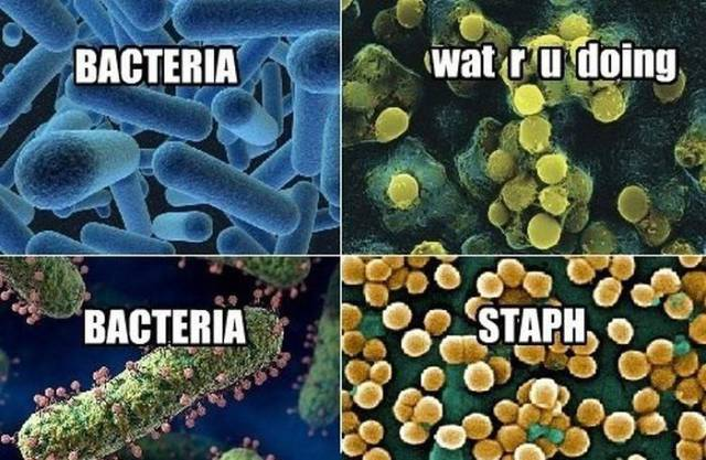 Nerdy Science Memes That Are Actually Kind of funny