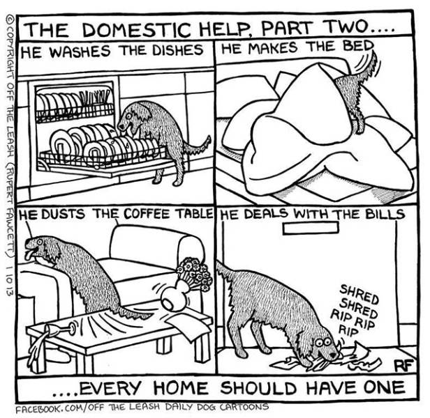 This Is the Reality of Life as a Dog Owner
