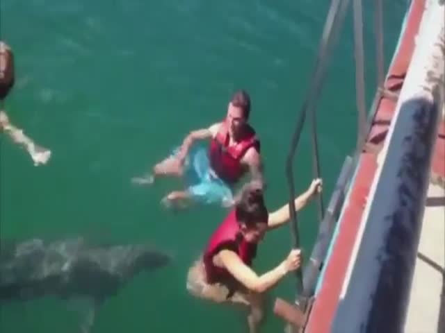 Cheeky Dolphin Makes Sure That This Girl Know He Is There