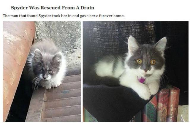 Cute Cats Who Got a Second Chance at Life