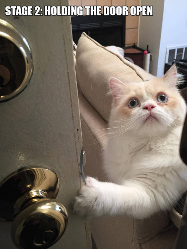 Would You be Able to Leave This Cute Cat Alone Everyday?
