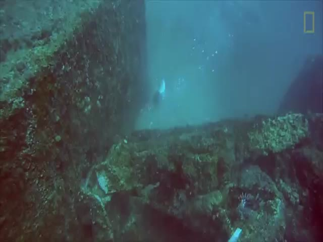 Giant Grouper Angers a Spear Fishman When It Steals His Catch Underwater