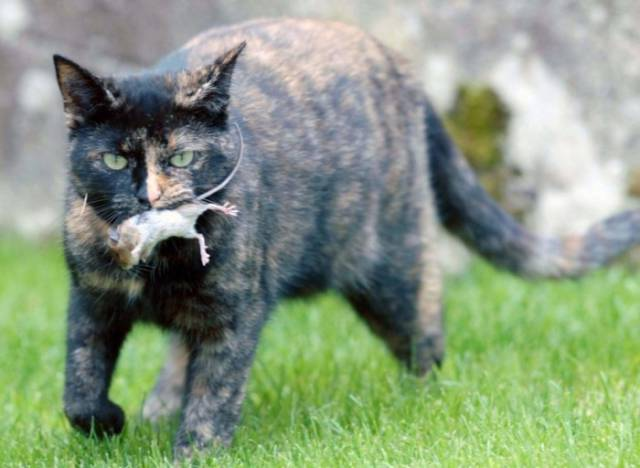 An Unlikely Friendship between a Cat and Mouse