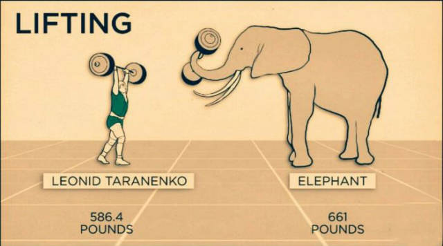 How Humans and Animals Really Compare in Speed and Strength