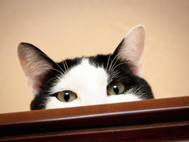 Cool Hacks That Will Make Your Life as a Cat Owner Even Easier