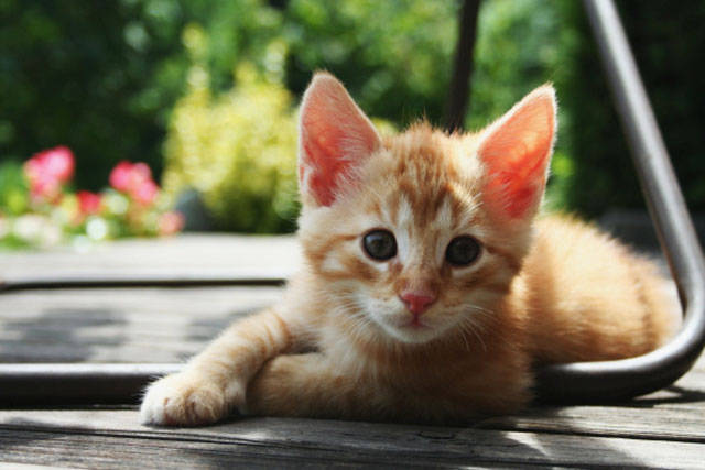 A Few Lesser Known Facts about Cats That You Might Find Interesting