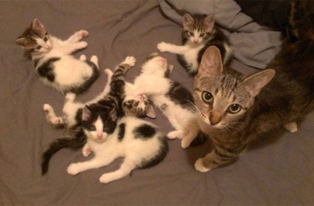 Even Cats Can be Proud Parents to Their Offspring