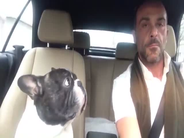 French Bulldog Sings Duet With Owner
