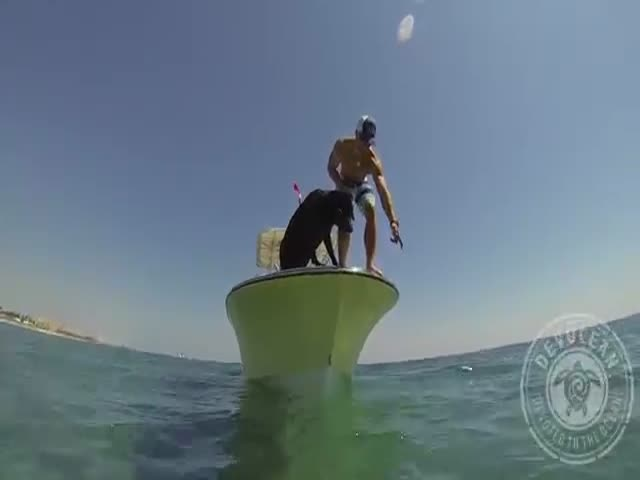 "This Clever ""Fisherdog"" Catches Lobsters Under the Sea"