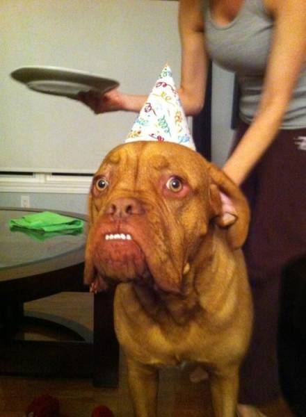 Meet Most Awkward Dogs Of 2015