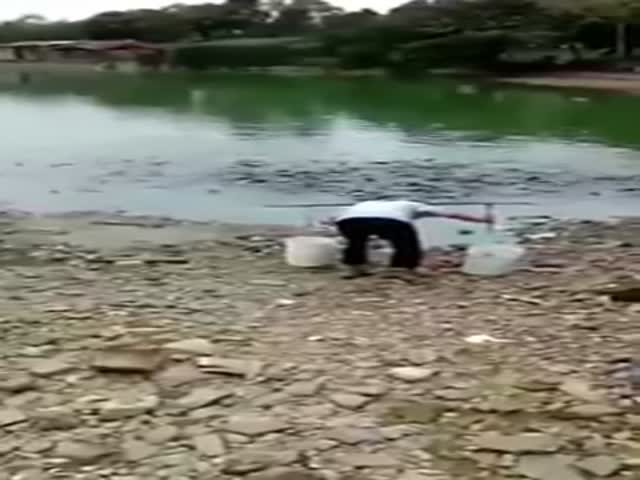 These Hungry Ass Chinese Fish Go On Shore To Eat