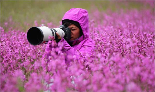 Fascinating Photos of Wildlife Photographers on the Job