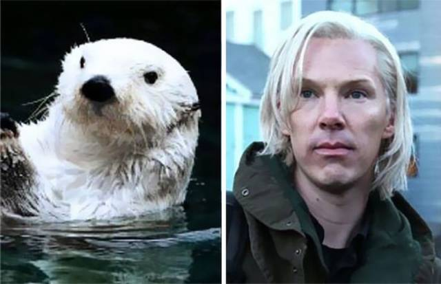 Proof That Benedict Cumberbatch Secretly Belongs to the Otter Family