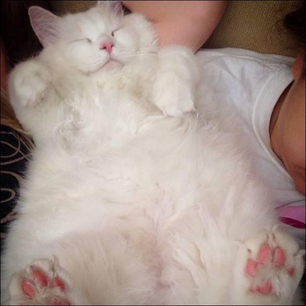 Scraggly Kitten Transforms into an Adorable Chubby Cat