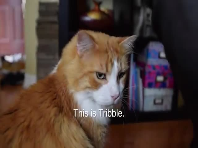 "The Adoption Story of ""Tribble"" the Cat with the Cutest Purr"