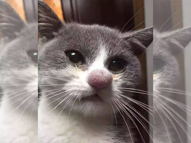 Cats Who Lost Their Battle against a Bee