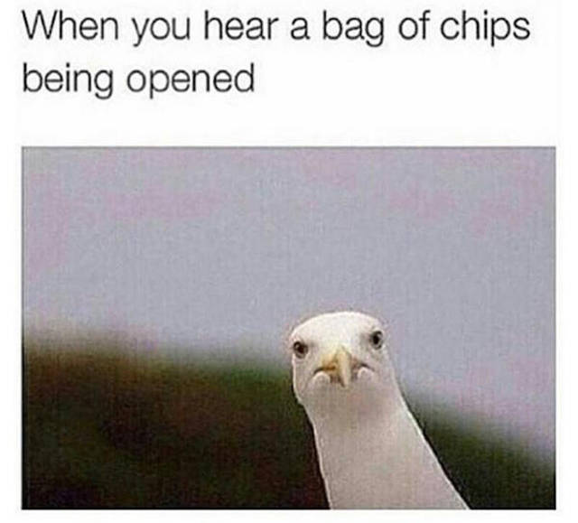 Memes to Make Your Weekend a Little More Amusing