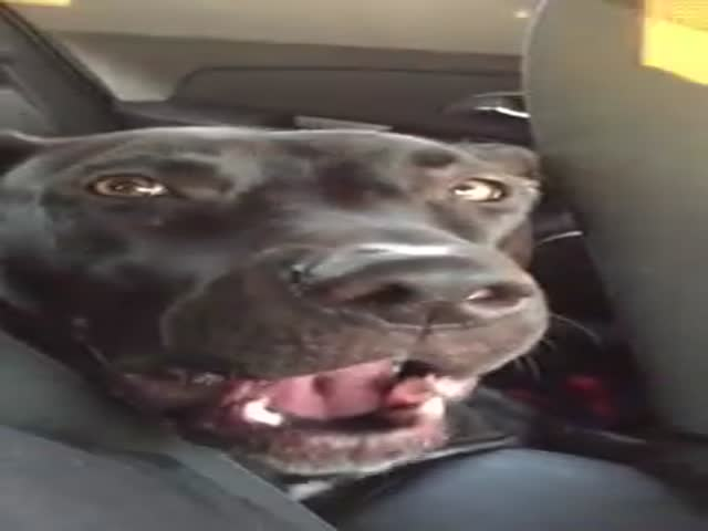 Dog Sings Adele's 'Hello'