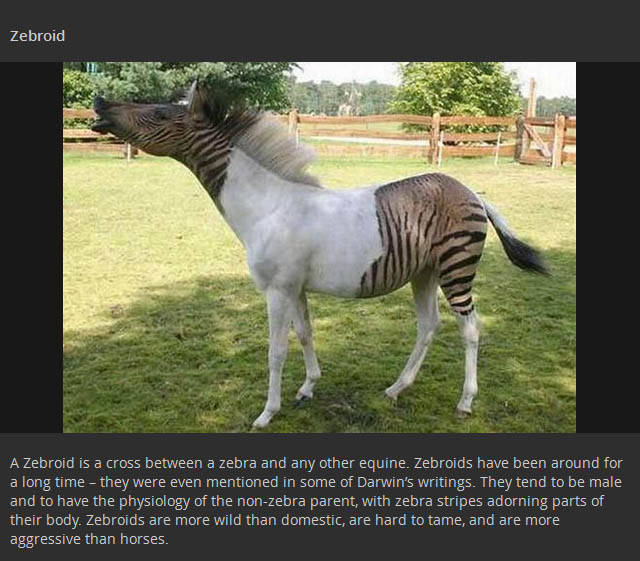 Real Animal Hybrids That Are Odd Combinations of Two Distinct Species