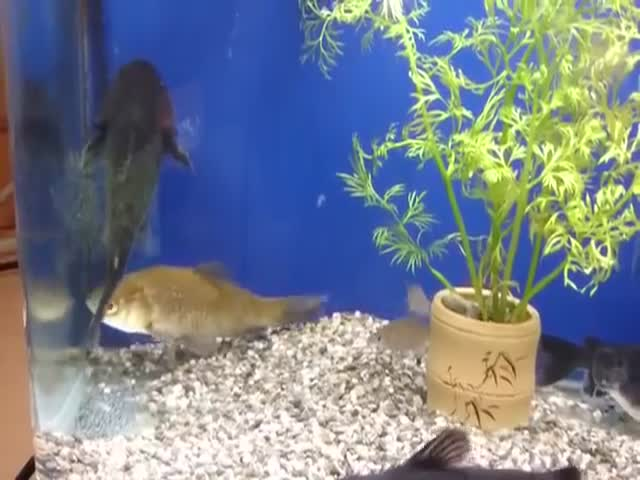 These Fish are Clearly Not Very Good Friends