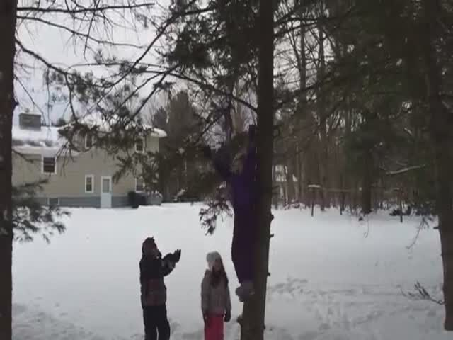 Hilarious Footage of Trees Fighting Back