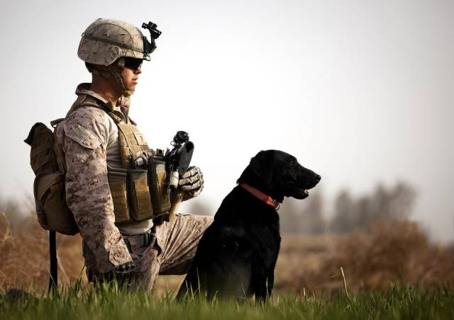 Hard-hitting Action Photos of Dogs Who Serve in the ...