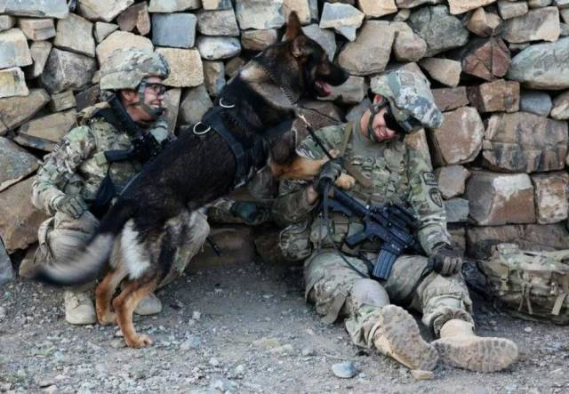Hard-hitting Action Photos of Dogs Who Serve in the Military