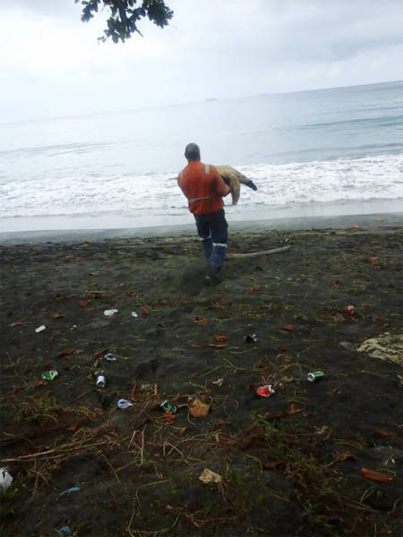 This Man Saves Sea Turtles in the Most Surprising Way