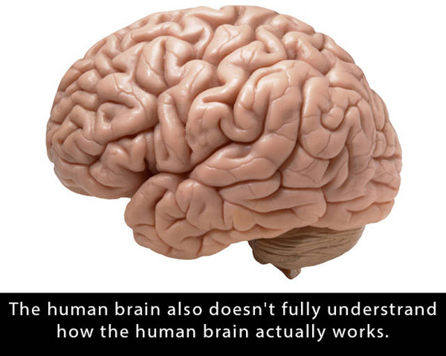 Facts That Will Boggle Your Brain