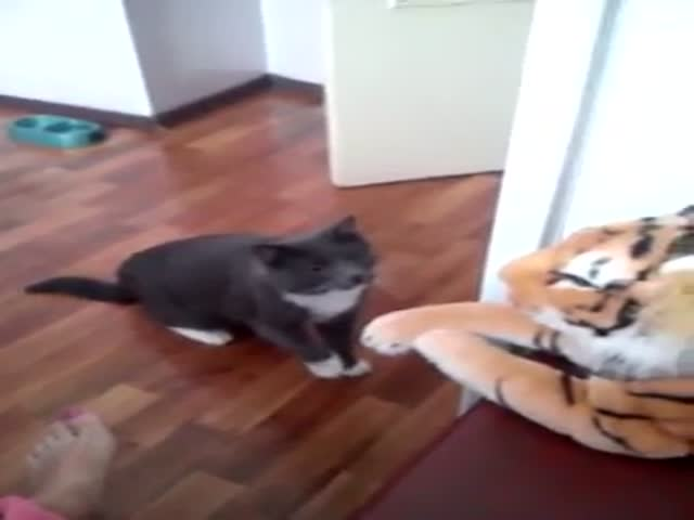 Cat Shows a Stuffed Tiger Who Is Boss