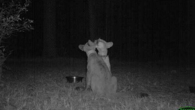 Strange Animal Pics Captured out on the Trail Cam