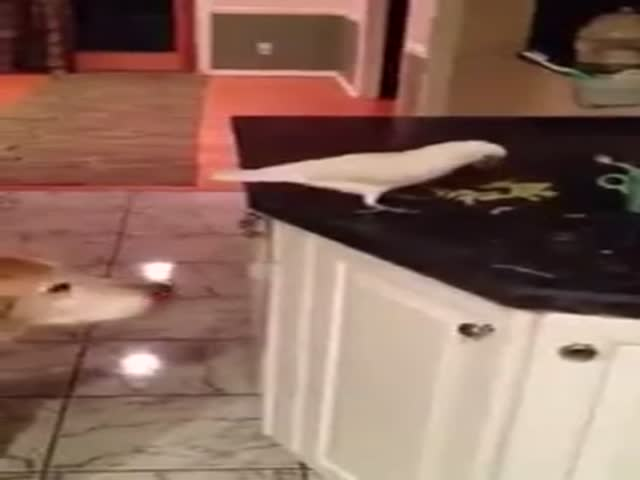 Kind Parrot Steals Some Noodles for Her Friend Waiting in the Wings