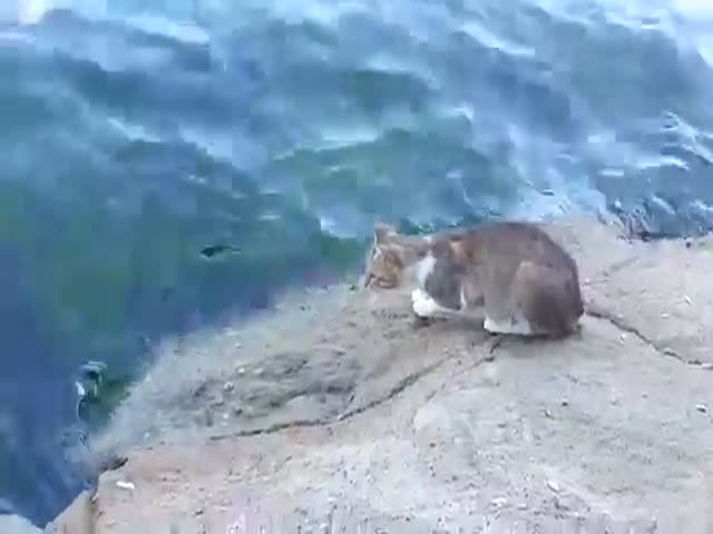 This Cat Is a Super Skilled Fisherman