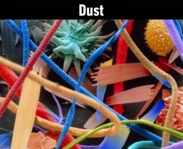 Things Take on a Magical Appearance Under a Microscope